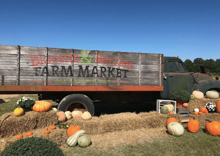 Blooms & Berries Located in Loveland, OH now open for Fall on the Farm